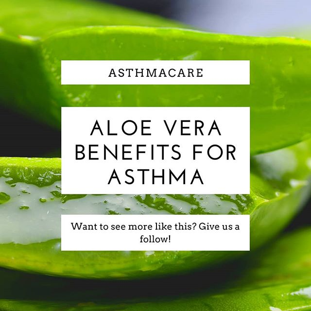 Aloe Vera Remedy for Asthma
